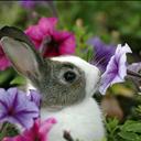 my-field-of-flowers