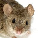a-nonnie-mouse
