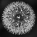 freakshowsandflowers