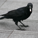 mylifehasgonetothebirds-blog