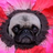 carryonmywaywardpug