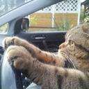 lolcats-lol-cat