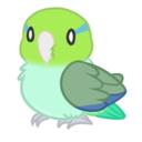jack-the-parrotlet