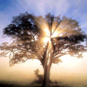 environmental-log-blog-blog