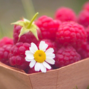 raspberrydaisieschlb