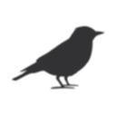 legendblackbird