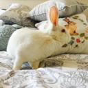 the-british-bunny