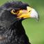 the eagle said
