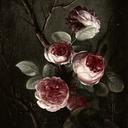 lavender-mists