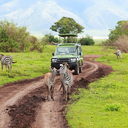 worldsafarilandtours