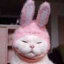 kitty-thug-blog