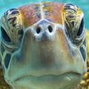 turtleinatrenchcoat