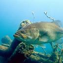 a-bonless-fish