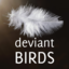 deviantbirds: deviantBirds