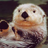 discourseontheotter