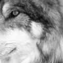 allseeingwolf