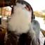 smokejournals