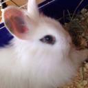 bunnys-bunnies