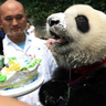 Panda loves to party.