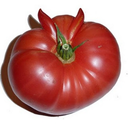 This is a picture of tastier tomato