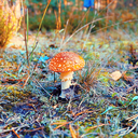 lindagoesmushrooming