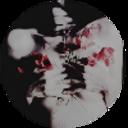 romanibredmoved-blog