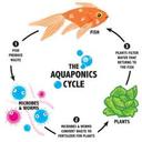 aquaponiakishelyen