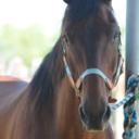 the-fabulous-horse-blog1