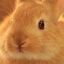 smutty-bunny