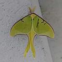 lovinglepidoptera