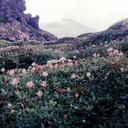 fantasiesandflowers