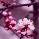 beautiful-nature-gifs