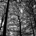 olesianott-nature
