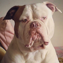 mendezbulldog-blog