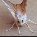 a-social-moth