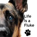 life-is-a-fluke-official