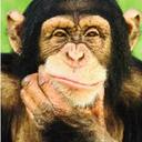 primataquepensa