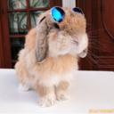 rabbitsoverload