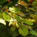 nature-reclaims