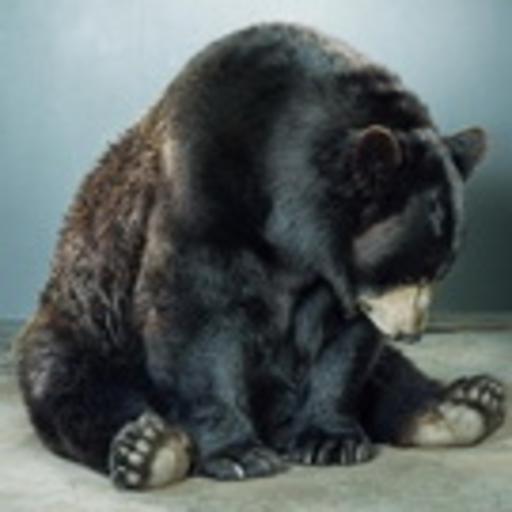 bear2x.tumblr.com/post/169716368044/