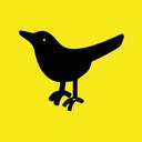 cairomockingbird