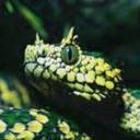 world-serpent-jormungandr
