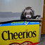 whatareyoudoingferret: What are you doing, fuzzbutt!
