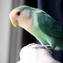 papegoja-blog