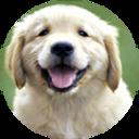 aliteraldog-blog