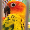 whenlifegivesyouconures