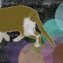 gone-cat-info