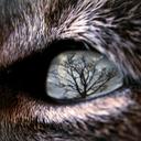 ilovewolves7-blog