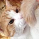 confetti-cat