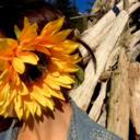sunflowers-and-trucks